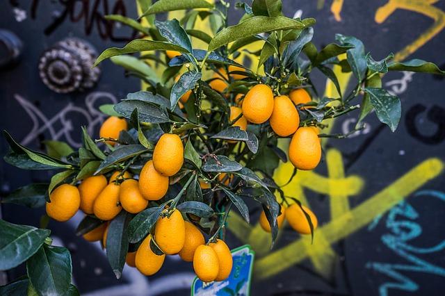 oranžové ovoce