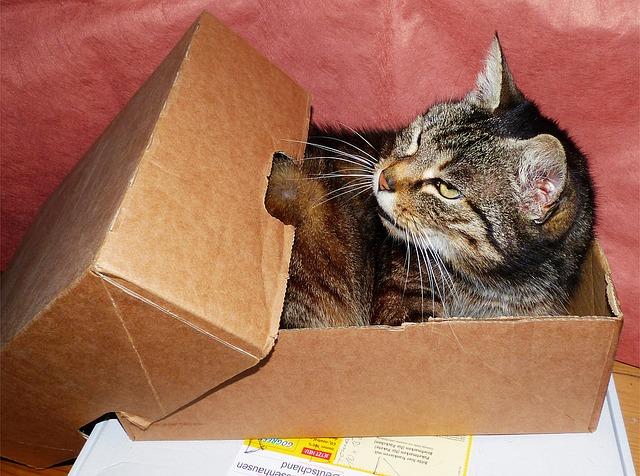 krabice s kočkou