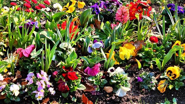 záhonek s květinami