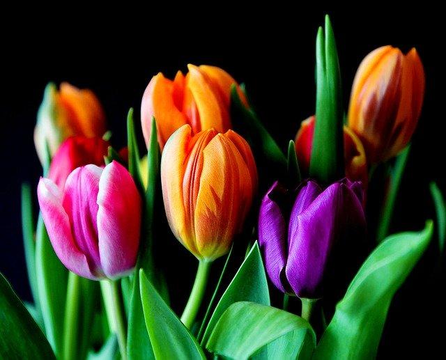 kytice různobarevných tulipánů